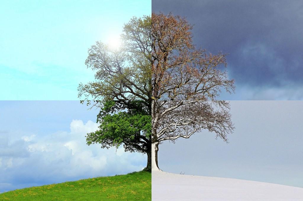 ett träd i fyra olika årstider.