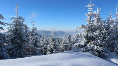 Snötäckt vinterlandskap med granar och fjäll.