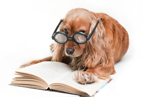 10 Writing Prompts—Written by Cats and a Dog