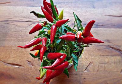 Röd chilipeppar