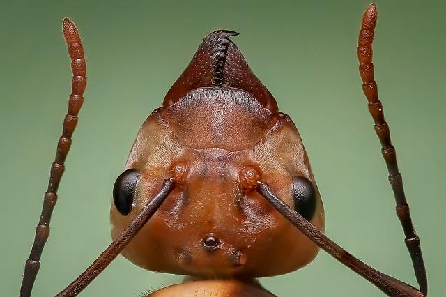 världens största myra