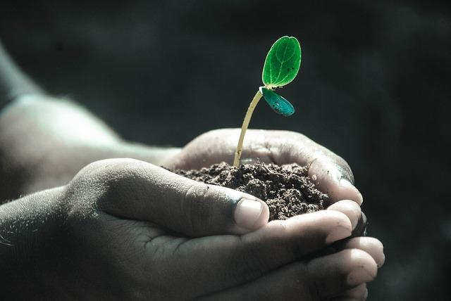 Händer håller om jord som en grön växt växer ur.