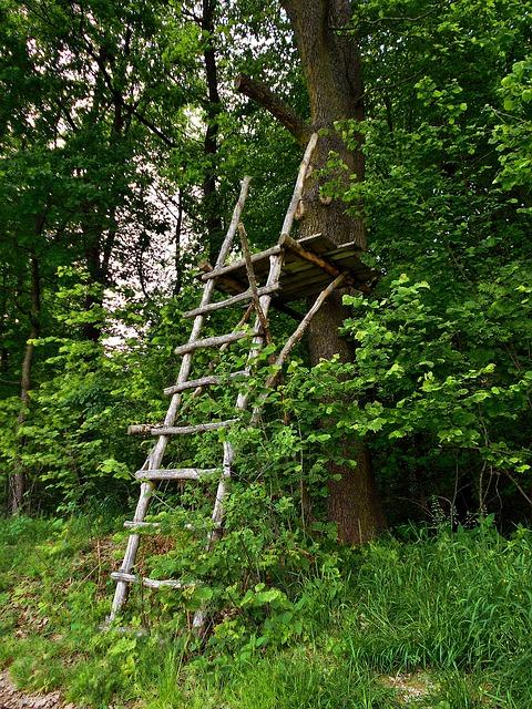 En stege av pinnar som leder upp till en avsats av brädor i ett träd.