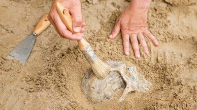 Två händer borstar bort jord från en skalle som ligger halv begravd i jorden.