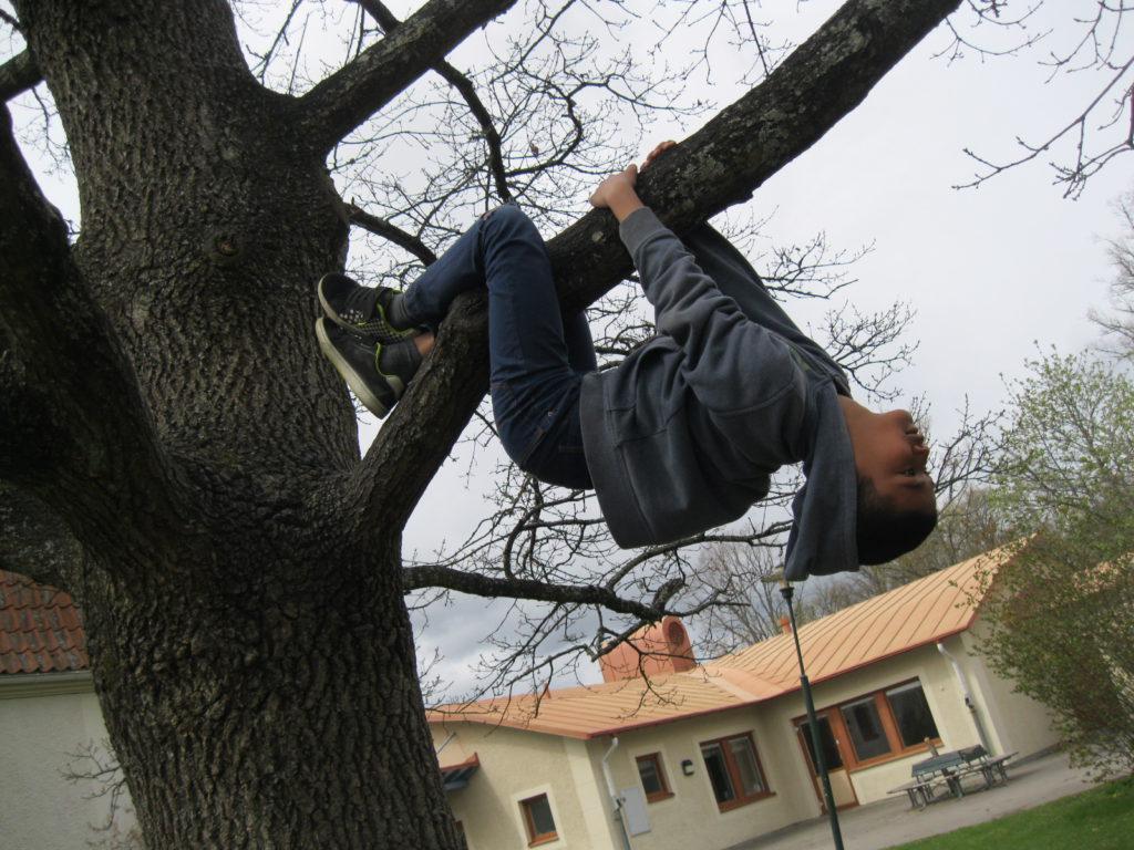 Ett barn hänger upp och ned från en trädgren.