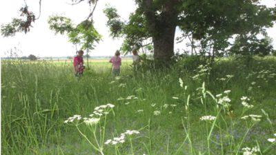 Ett fint träd sträcker sig upp ibland många fina blommor. Under trädet står tre barn och pratar och leker.