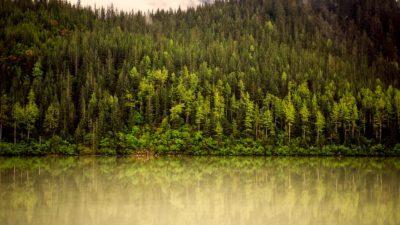 En sjö vid en skog av barrträd.