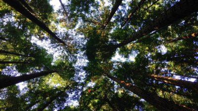 Träd mot bakgrund av himmelen.