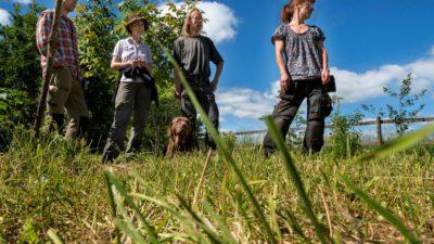 Fyra odlare står och inspekterar marken. I mitten av odlarna är en hund.