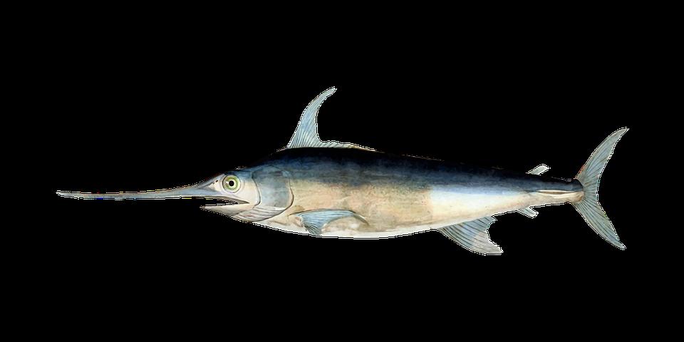 En svärdfisk.