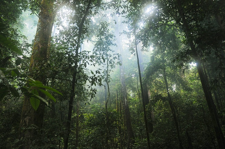 En regnskog. Stora träd sträcker sig upp mot himlen och mellan träden silar det ner solsken.
