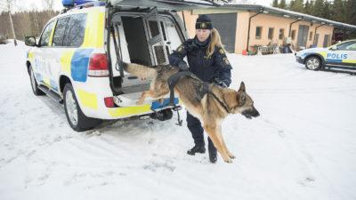 En polisbil står parkerad i snö. En polis tar emot en hund som hoppar ut ur polisbilens baklucka.