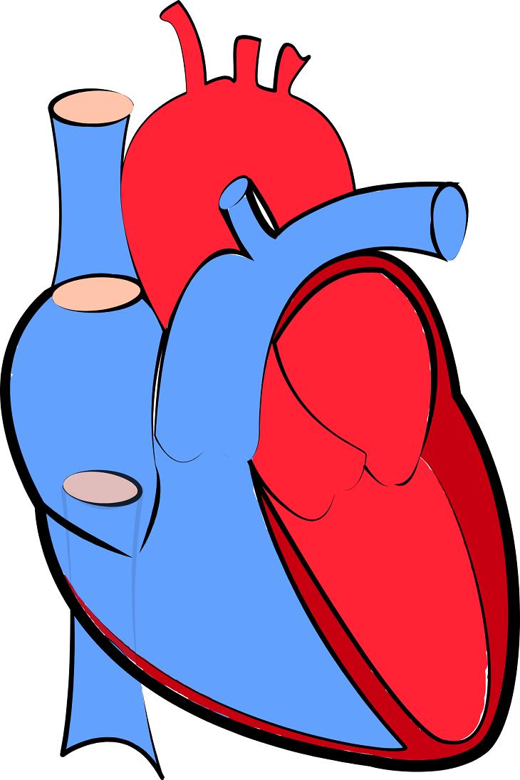 En ritad bild på ett hjärta. Ena halvan av hjärtat är blå, andra halvan är röd.