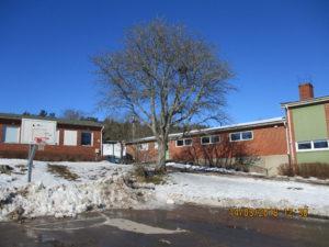 En skolgård. Ett träd. Snö som smälter. En blöt basketplan.