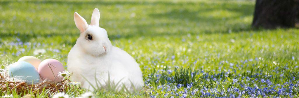 En vit kanin sitter på en grön gräsmatta. Bredvid kaninen ligger ett fågelbo med flera färgglada ägg.