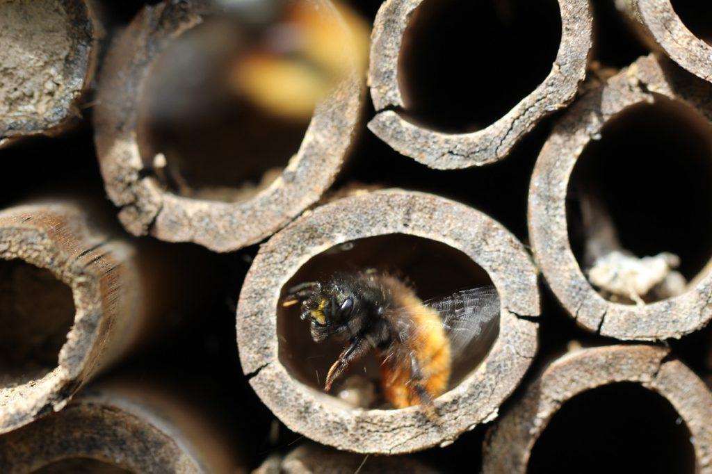 Flera ändar av rör. I ett av rören är ett gult fluffigt bi på väg att krypa ut.