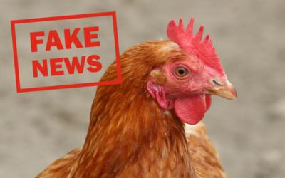 """En brun höna och texten """"Fake News"""" skriven med röda bokstäver."""