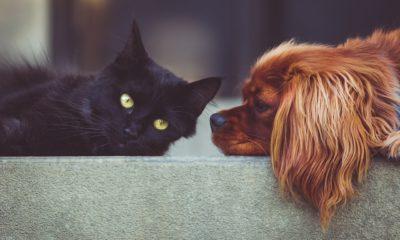 En svart katt och en brun hund.