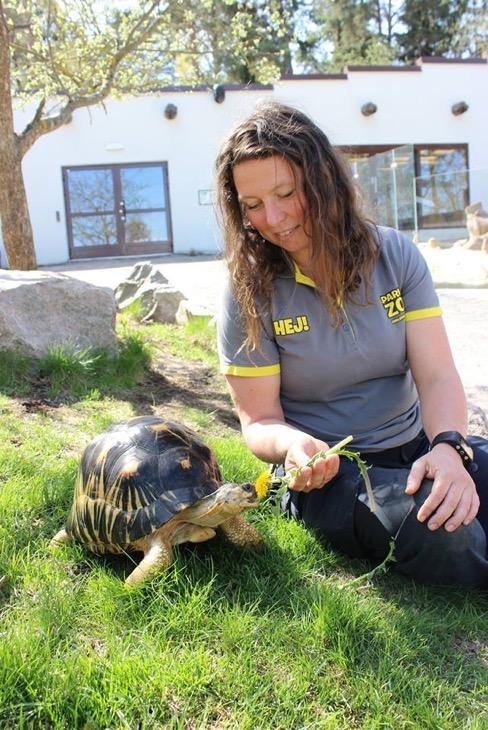 Zoologen Linn Lagerström sitter vid parkens strålsköldpadda.