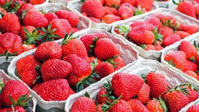 Många askar med jordgubbar står uppradade tätt intill varandra.