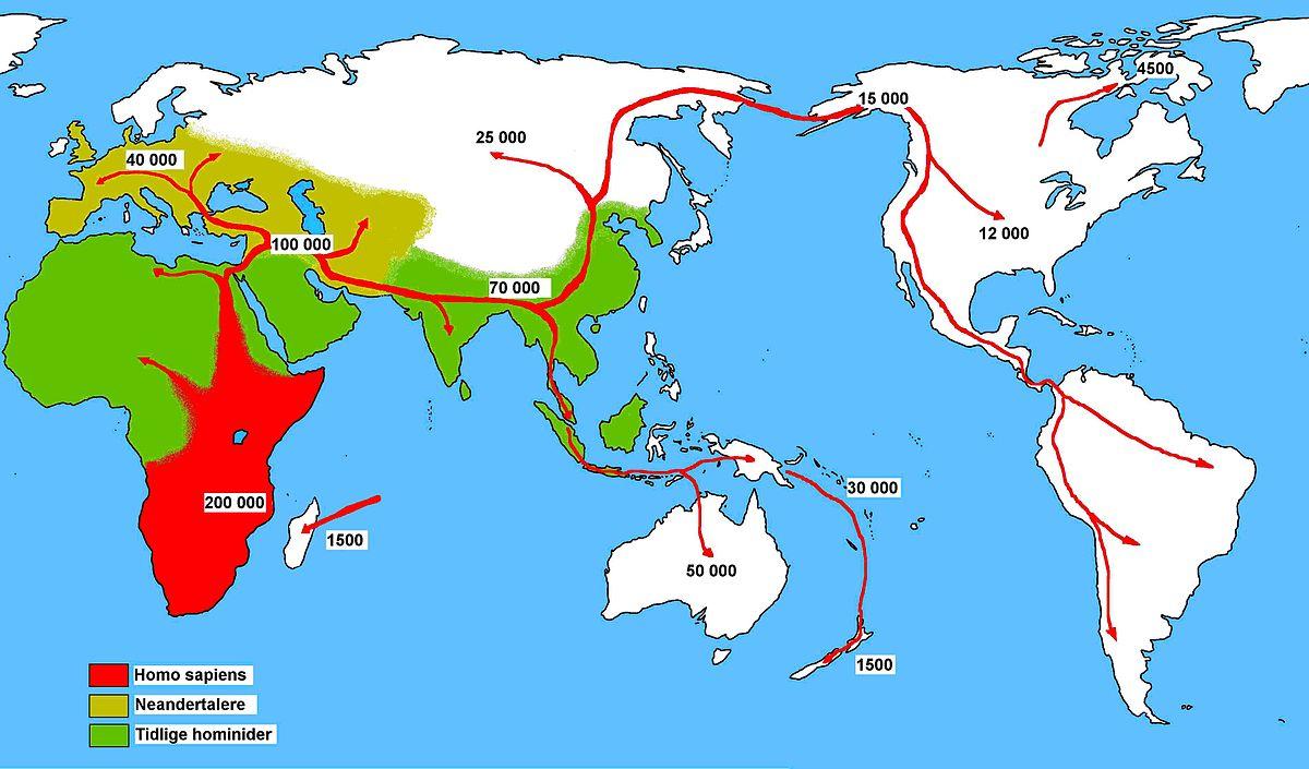 En karta över världen med pilar på hur Homo sapiens rört sig genom tiderna