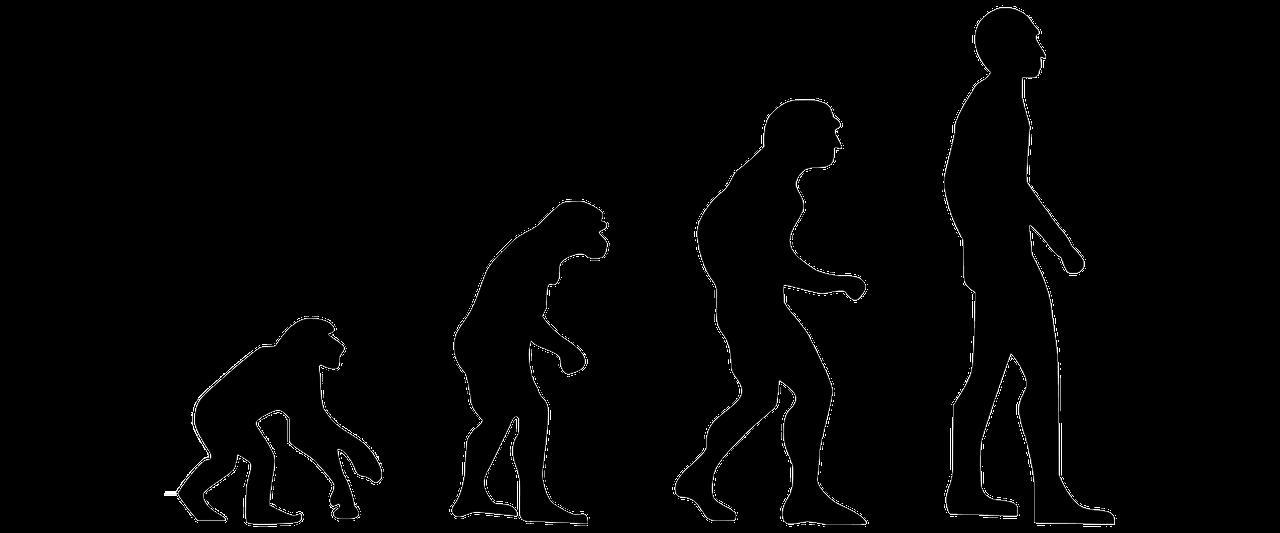 En apa som utvecklas till en människa