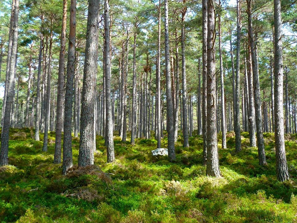 En skog med gröna träd