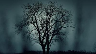 Trädgrenar i månljus.