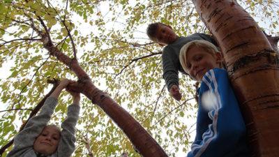 Foto på elever som klättrar i träd