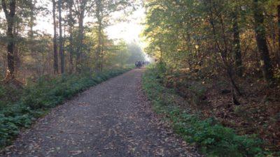 En skolklass promenerar längs en skogsväg.