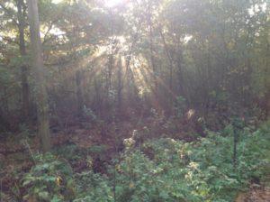 I skogen. Solens strålar skiner mellan trädens grenar och löv.