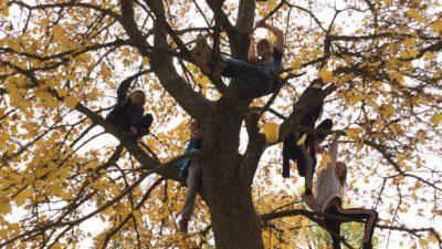 Barn som sitter i ett stort träd.