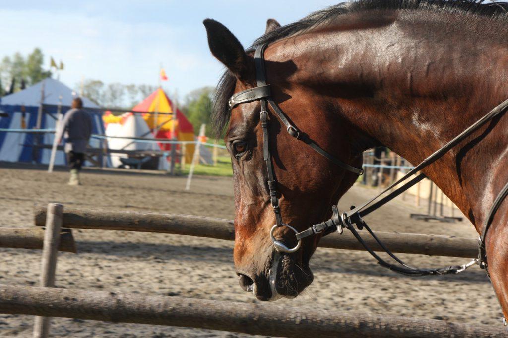En hästs huvud syns på bilden