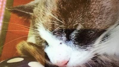 Foto på Theas katt.