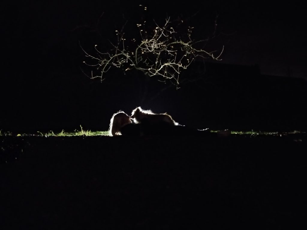månen lyser svagt upp konturerna av en hund stående på en person. Hunden tittar kärleksfullt ner på en människan