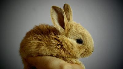 Foto på kanin