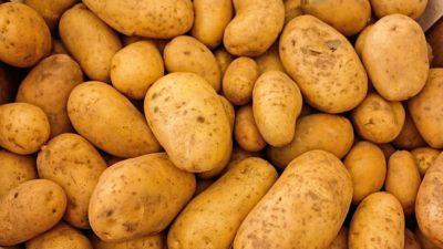 närbild på potatis