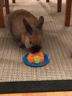 Kanin äter morotstårta