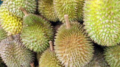 Taggiga gröna durian frukter