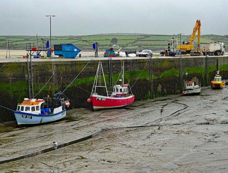 En torrlagd hamn. Längs med hamnkanten ligger det flera båtar. En fiskmås pickar i leran på bottnen.