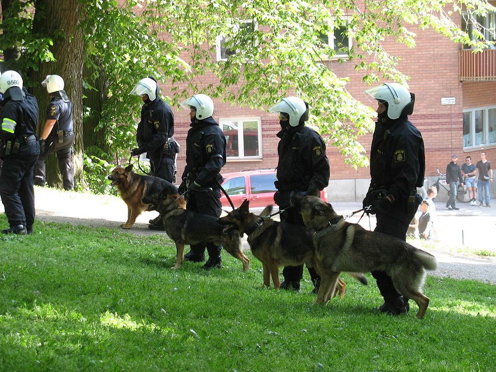 Poliser står uppradade på en gräsmatta och håller i sina polishundar.