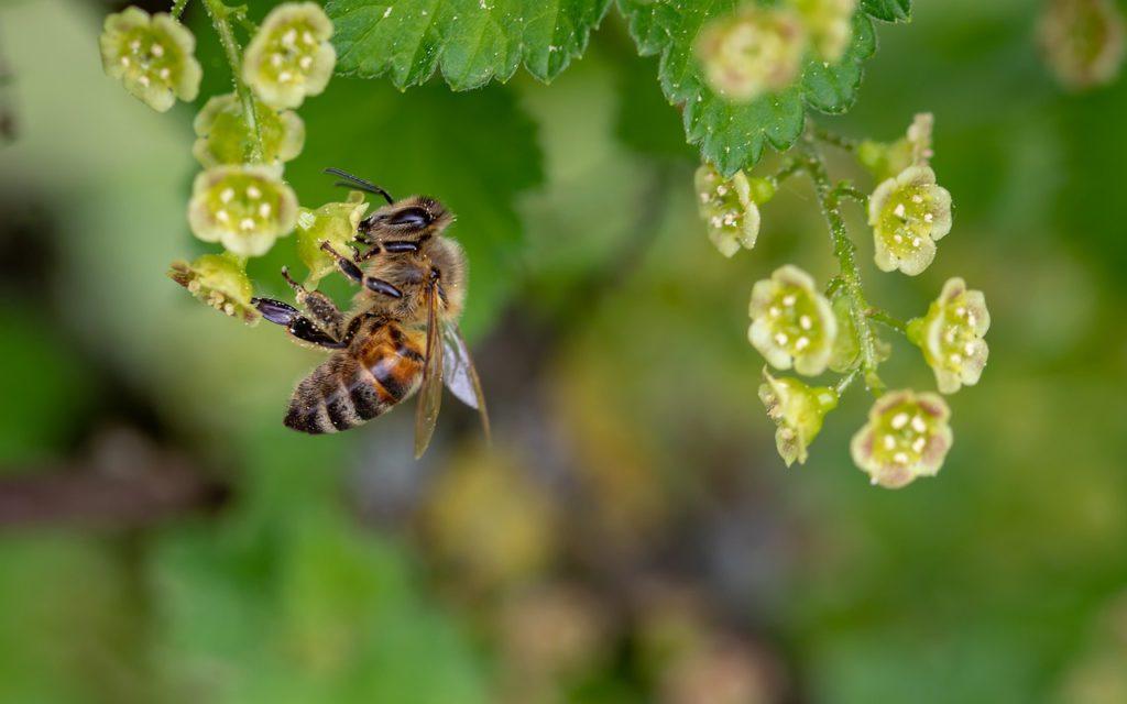Ett litet bi har landat på en blomma.