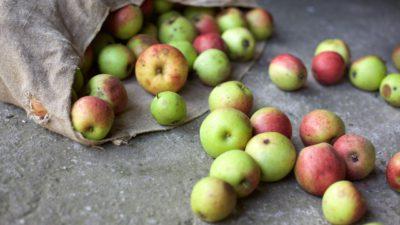 Nyskördade äpplen rullar ut från en påse på ett bord.