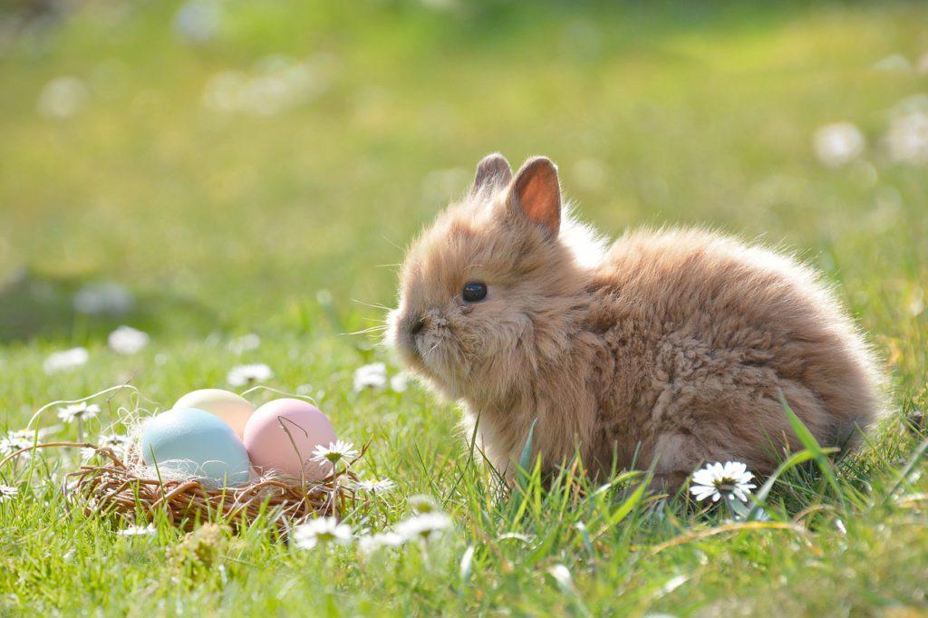 En kanin sitter ute i gräset. Solen lyser och framför kaninen ligger ett litet fågelbo med färgglada ägg.
