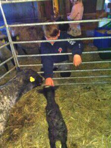 En pojke och en svart lamm