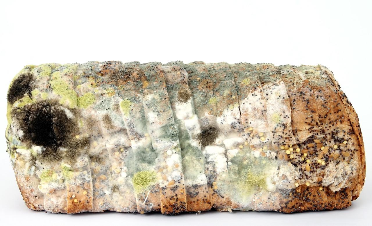 Bild på en brödlimpa som nästan är helt täckt av mögel.
