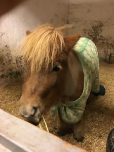 En ponny i en spilta