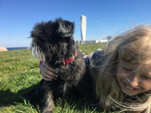 Hund och flicka leker. Turning torso i bakgrunden.
