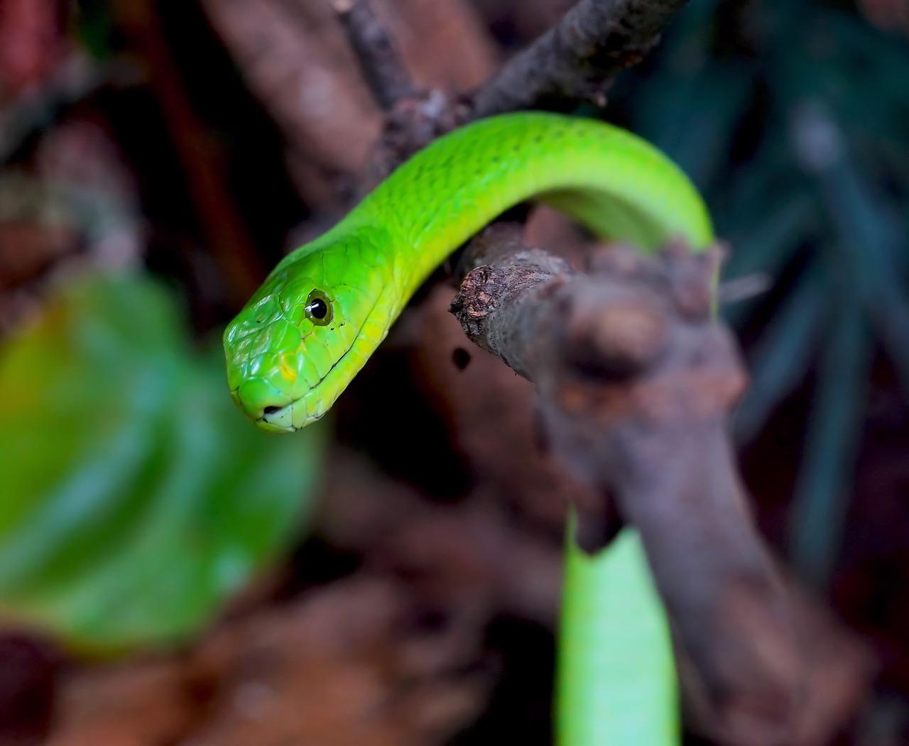 En liten orm hänger på en trädgren.