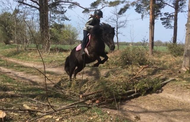 En ryttare sitter på hästen som hoppar över grenar.